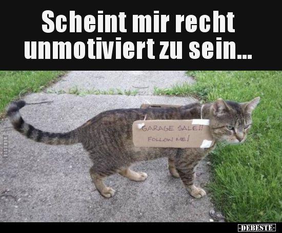 Scheint Mir Recht Unmotiviert Zu Sein Katzen Lustige Spruche Lustig Katzen Witze