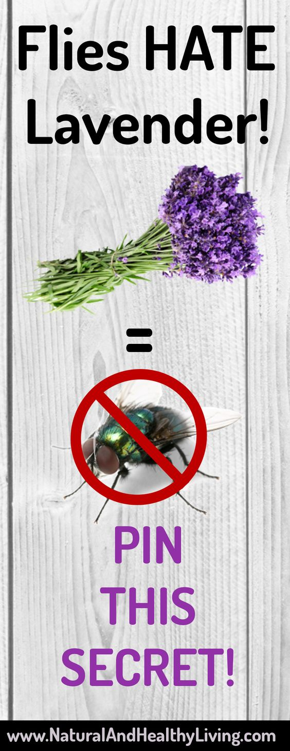 Flies HATE Lavender! I did not know this! #hack