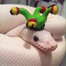 snake wearing hat - Google Search | Snakes in Hats ... Cute Ball Python With Hat