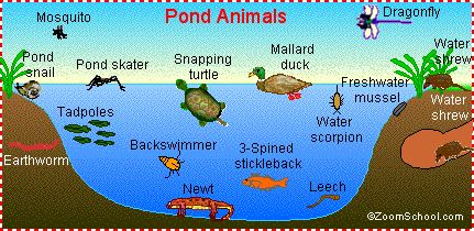 Information and printables about pond habitat and everything that lives in it. This site also has many other ecosystems. Very informative!