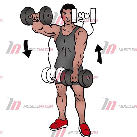 - 👉Dumbbell Front Raises👈 - Follow @musclenationofficial  @musclenationofficial  @musclenationofficial -  The alternate front dumbbell raise is an exercise that isolates and hits the front deltoid (shoulder). This is a great exercise for those of you who want to really develop the front of the shoulders.  The upper chest is also hit with this movement and is classified as a secondary muscle group.  You can perform this exercise standing up or seated. You can also raise the dumbbells…