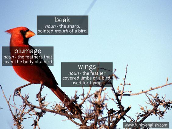 Bird - www.funkyenglish.com
