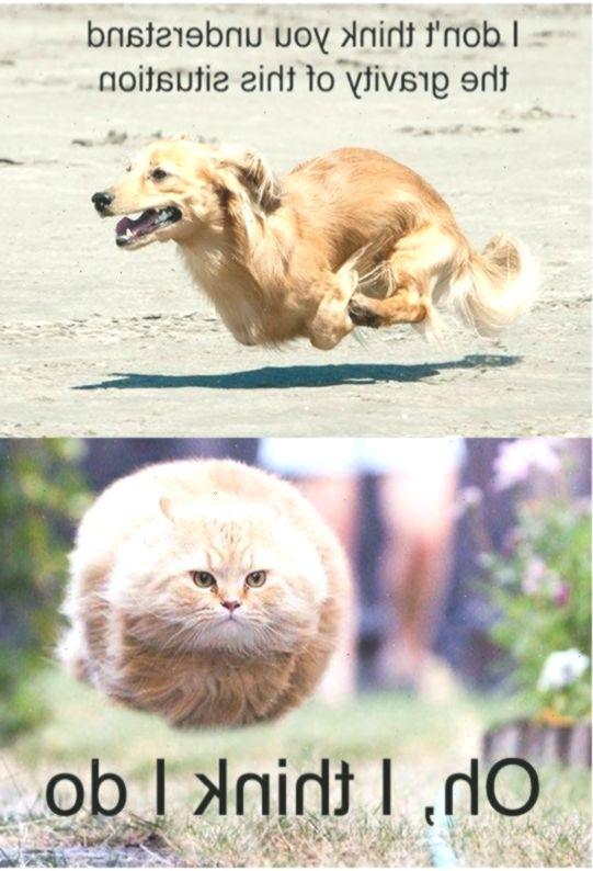 Lernen Sie Muskatnuss Kennen Die Katze Die 31 Jahrige Katze Die Alteste Lebe Funny Animals Cute Animals With Funny Captions Animals