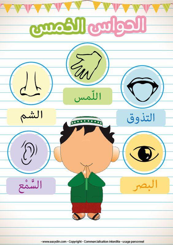 L'ouïe (السَّمْع), l'odorat (الشم), le goût (التذوق), le toucher (اللّمس) etla vue (البصر), apprendre les 5 sens à son enfant pour l'aider à comprendre à quoi servent chacun de s…