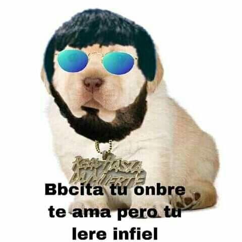 Pin De Anyelina Quevedo En Z Momos Memes Divertidos Memes De Perros Chistosos Memes