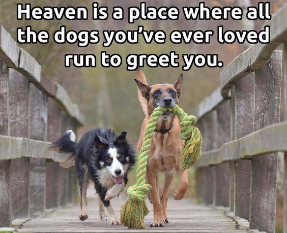 Heaven is a place where all the dogs you've ever loved run to greet you ...: