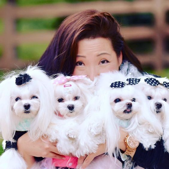 Maltese Puppies Cute Pictures And Facts Maltese Dogs Maltese