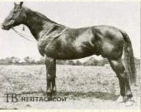 Quatrain 1922 Gelding Omar Khayyam Bonnie Mary By Ultimus Pictured 4 F X4 R To Domino 5x4 To Galopin 5 C X5 C To Hamp Sport Horse Show Horses Eventing