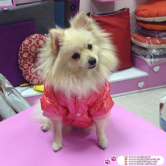 Piumino Imbottitissimo Rosa per cani #ModaCani #Spitz - Piumino Imbottitissimo Rosa per cani di piccola e media taglia: cappuccio con pelo sintetico lungo, per riparare il cane dal freddo, vento e pioggia