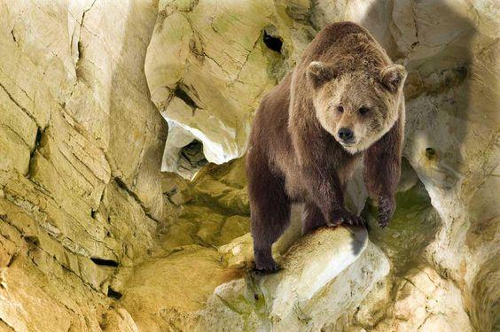 Les Grottes d'Azé sont un lieu unique où les visiteurs peuvent découvrir à la fois une grotte préhistorique naturelle et un musée sur le thème de la préhistoire et de l'archéologie. Source image: Balades en Bourgogne