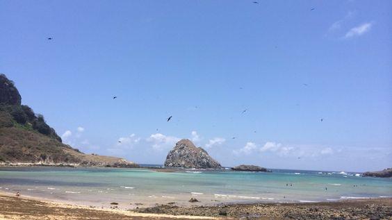 Os pássaros e o mar!