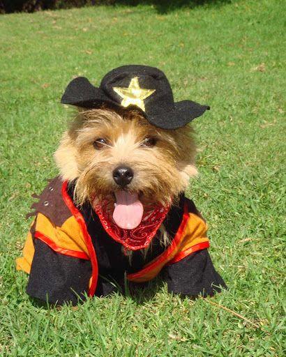 Hot Diggity Dog Walking!