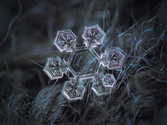 Snowflake macro photo: Icy jewel