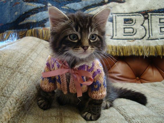 Adorable cat in a little sweater