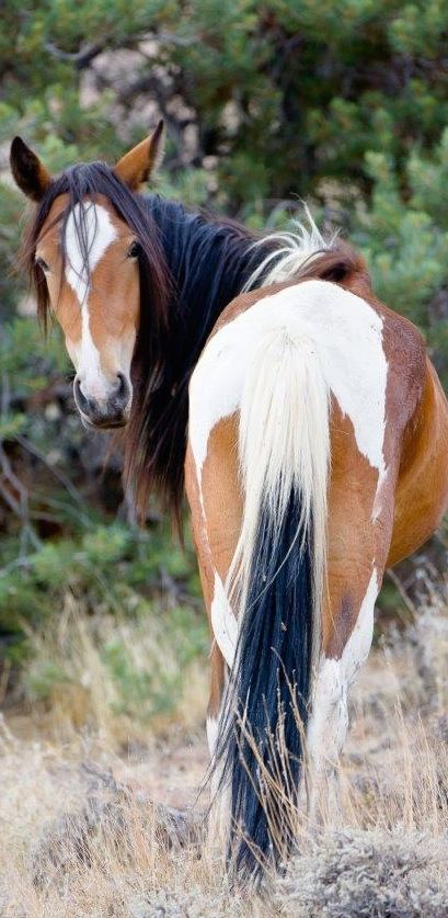 Pinion is a mustang. She lived in the wild until she was a six year old. She is…