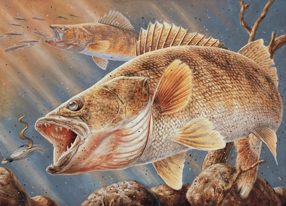 Scd fish breading recipe wrights walleye breading best for Fish fry breading