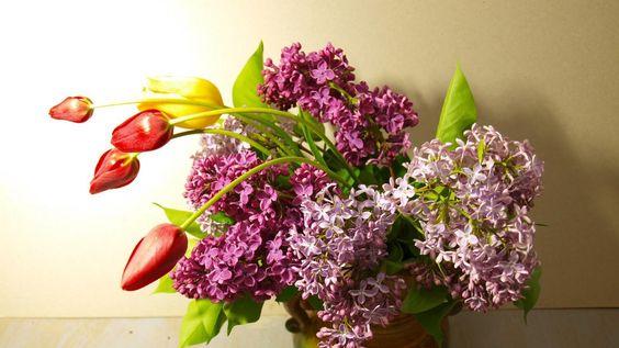 lilacs, bloom, tulips - http://www.wallpapers4u.org/lilacs-bloom-tulips/