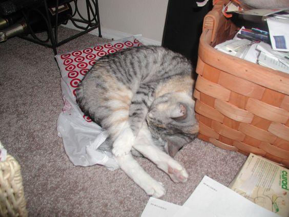 Teeya loves laying on bags!!! LOL