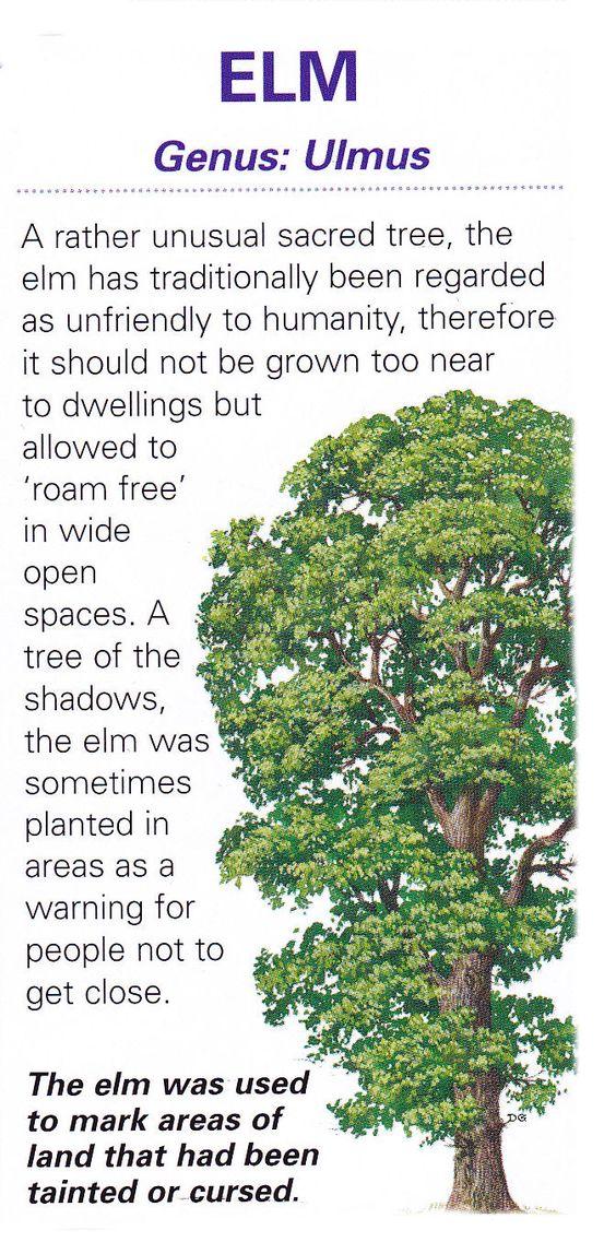 Sacred celtic tree - Elm: