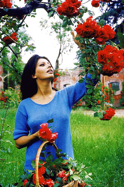 """""""Sophia Loren picking flowers in her garden at her home in Rome, 1964. Photo by Alfred Eisenstaedt"""""""