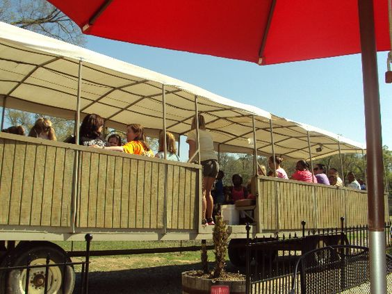 Tram at Gone Wild Safari, Hooper Road, Pineville, LA (Tioga, LA) - an interactive zoo with many animals not found at the Alexandria Zoo