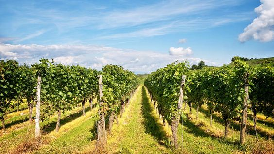 Best wineries in NJ from Heritage Winery to Old York Cellars