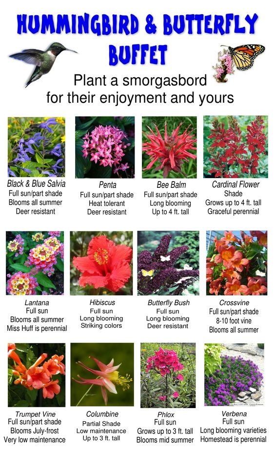 Attracting Hummingbirds and Butterflies to your garden can be easier than you think! We suggest planting an array of flowers and plants to attract hummingbirds and butterflies. We have put together a list of flowers and plants to cover your yard! We suggest Verbena's, Trumpet Vine, Columbine, Phlox, Crossvine, Butterfly Bush, Lantana, Hibiscus, Cardinal Flower, Bee Balm, Penta, and Black and Blue Salvia.