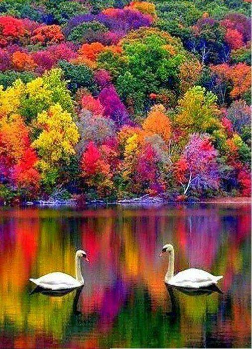 Denotativo, Saturado. El color se satura para acentuar una sensación. En este caso se saturan los colores de los arboles.