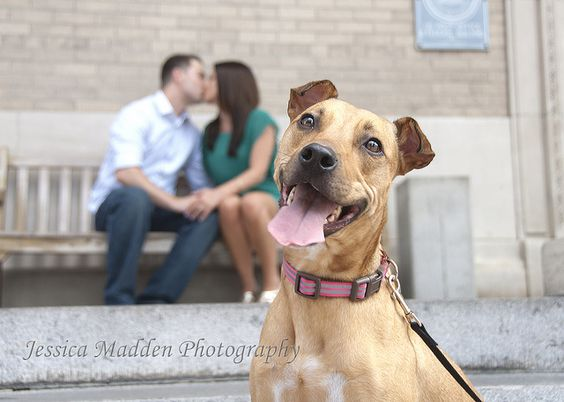 I love pets in family photos! - Jessica Madden Photography, via Flickr