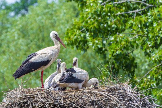 White stork nest by belizar via http://ift.tt/28Wt8SC