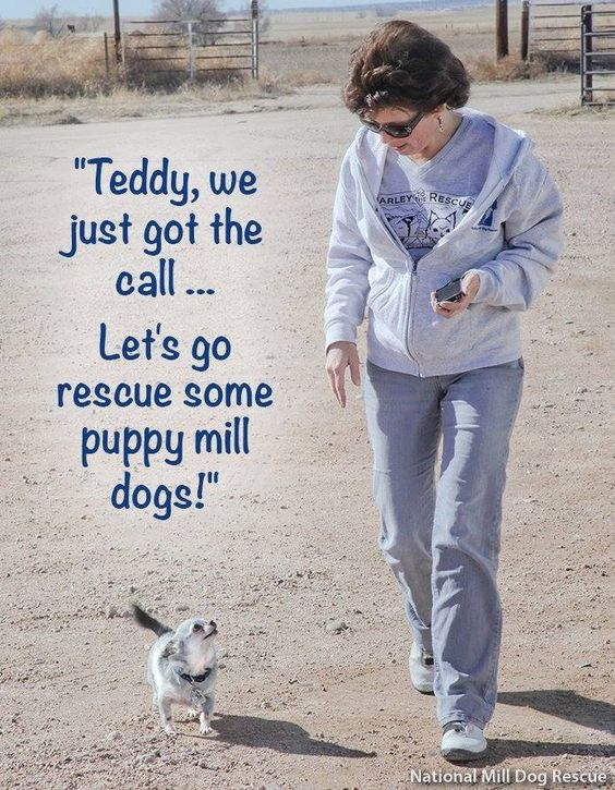 We leave TOMORROW with 'Harley to the Rescue'. I'm so excited. We'll be posting from the road, so you won't want to miss a thing!  http://www.youcaring.com/nonprofits/harley-to-the-rescue/150765