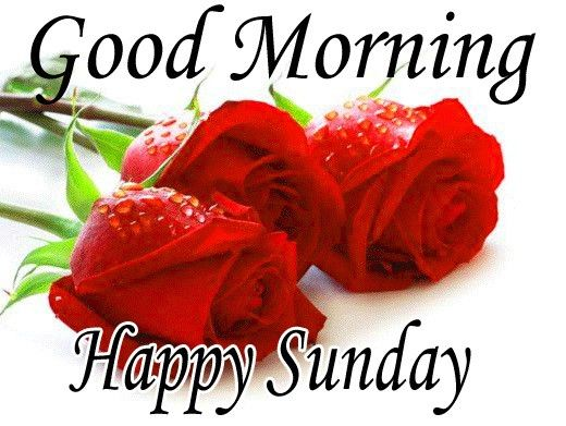 Good Morning Images With Rose And Happy Sunday Good Morning Rose Images Good Morning Wallpaper Good Morning Images Good morning sunday hd wallpaper