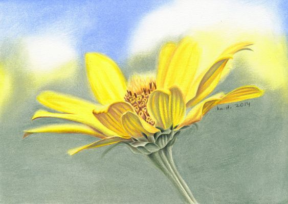 wild_flower___colored_pencil_drawing__by_kad_portraits-d86yx9t.jpg (1024×727)