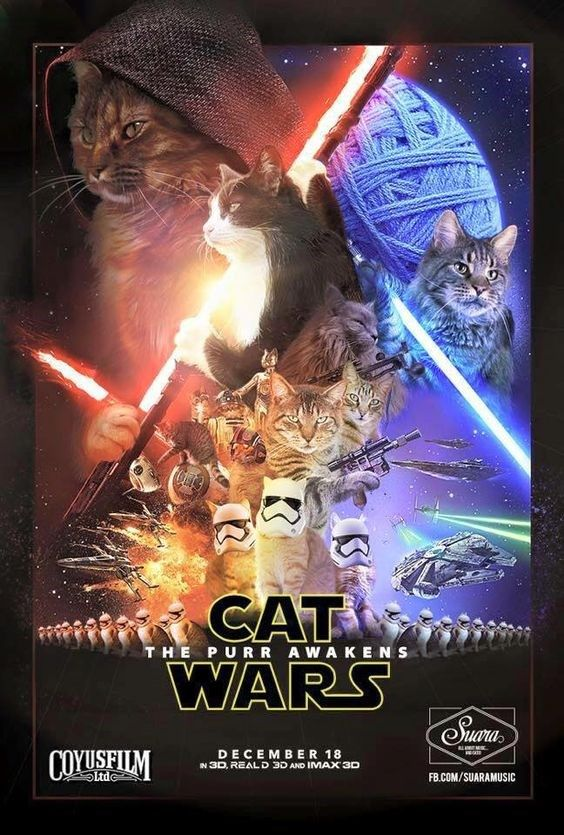 20 Of The Best Cat Wars Memes To Get You Ready For Star Wars Star Wars Humor Star Wars Memes Star Wars