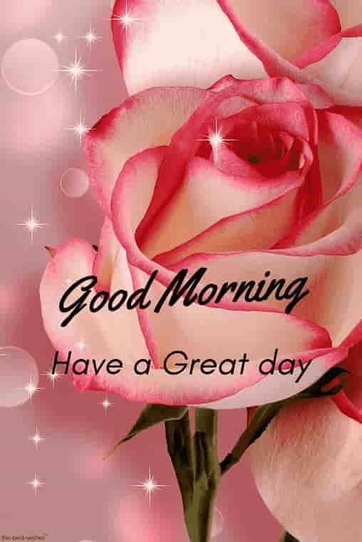 Best Good Morning Hd Images Wishes Pictures And Greetings Good Morning Flowers Good Morning Roses Morning Flowers