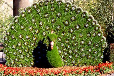ARTE Y JARDINERÍA DISEÑO DE JARDINES: Arte topiario. Jardinería ornamental