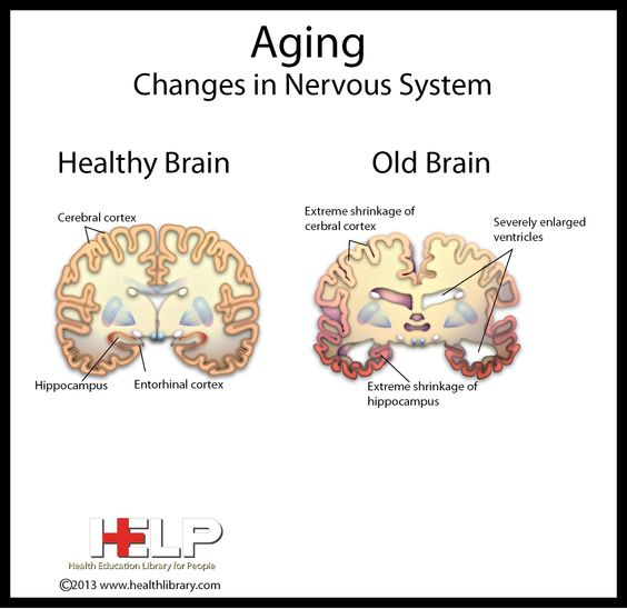 the nervous system and aging This is a mini-review of vitamin d3, its active metabolites and their functioning in  the central nervous system (cns), especially in relation to nervous system.