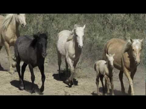West Douglas - Colorado's Wild Horses Need Your Help