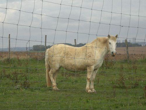 """le+cheval+grillagé+:+Je+n'en+avais+pas+conscience+à+l'instant+de+capter+l'image+:+c'était+avant+tout+au+cheval+que+je+songeais.+J'ai+pour+ces+animaux+une+tendresse+particulière,+les+trouve+si+beaux+au+galop. C'est+en+la+""""développant""""+sur+mon+ordinateur+que+j'ai+vu+sa+tristesse.+Le+grillage+du+haut+en+bas.+L'absence+de+perspective,+le+gris,+les+tours+au+fond.  La+ballade+qui+en+fut+l'occasion+n'a..."""
