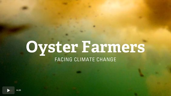 Oyster Farmers - Facing Climate Change