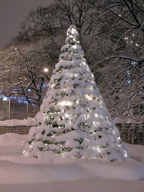 Lighted Snow Tree, Tallinn, Estonia photo via karla
