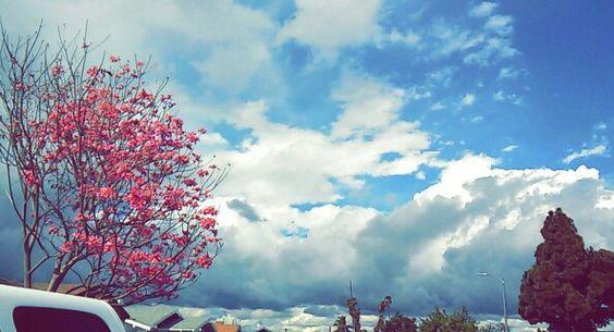 Afternoon skies in LA
