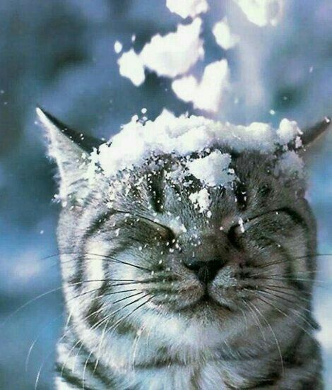 Striped cat with eyes closed and snow on head on Hello Lovely Studio #adorableanimals #winterwonderland
