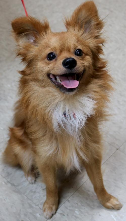 Adoptable Animal Humane Society Of Jefferson County Wisconsin
