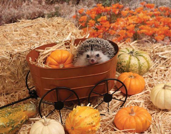 The Adventures Of Humphrey J Hedgehog , http://itcolossal.com/humphrey-j-hedgehog/: