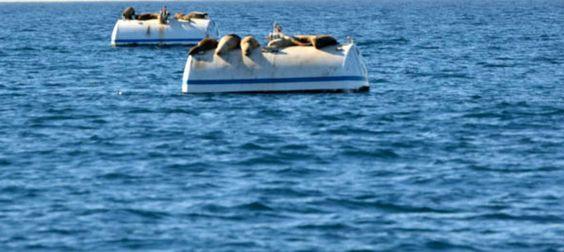 Wanderpreneurs Adventure Travel Sea Lions Marina del Rey California
