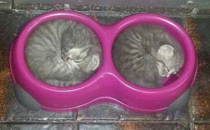 At first I thought it was some sort of googles.....then I took a closer look. I enjoy seeing sleeping cats. They look so comfy.  :-)