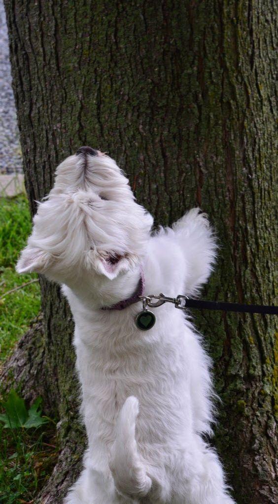un écureuil là haut?:
