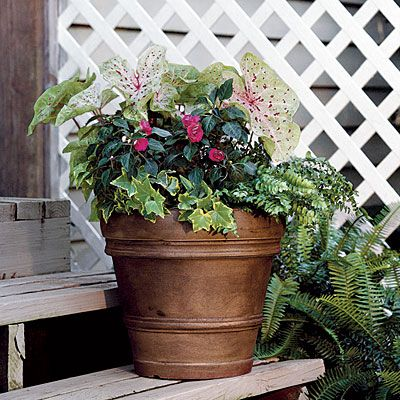 shade container- Ivy, ferns, impatiens, calidium= lovely