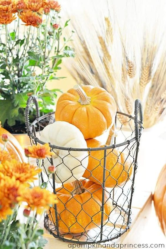 Fall display..rustic wire basket mini pumpkins mums and wheat.